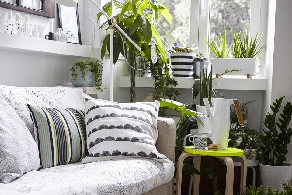 interior design with plants