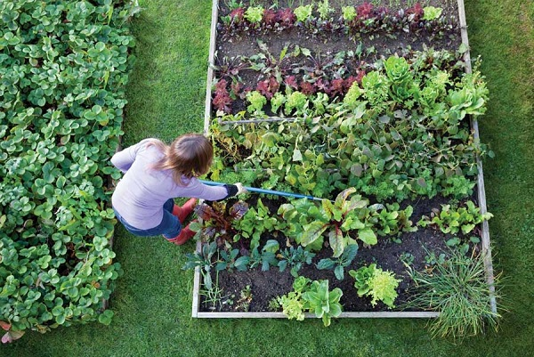 A woman poking a garden bed with a long stick