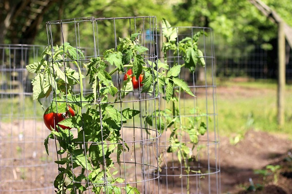Plants hanging on to a garden cage